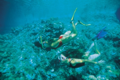Snorkeling Day Trip in Ras Mohamed from Sharm port